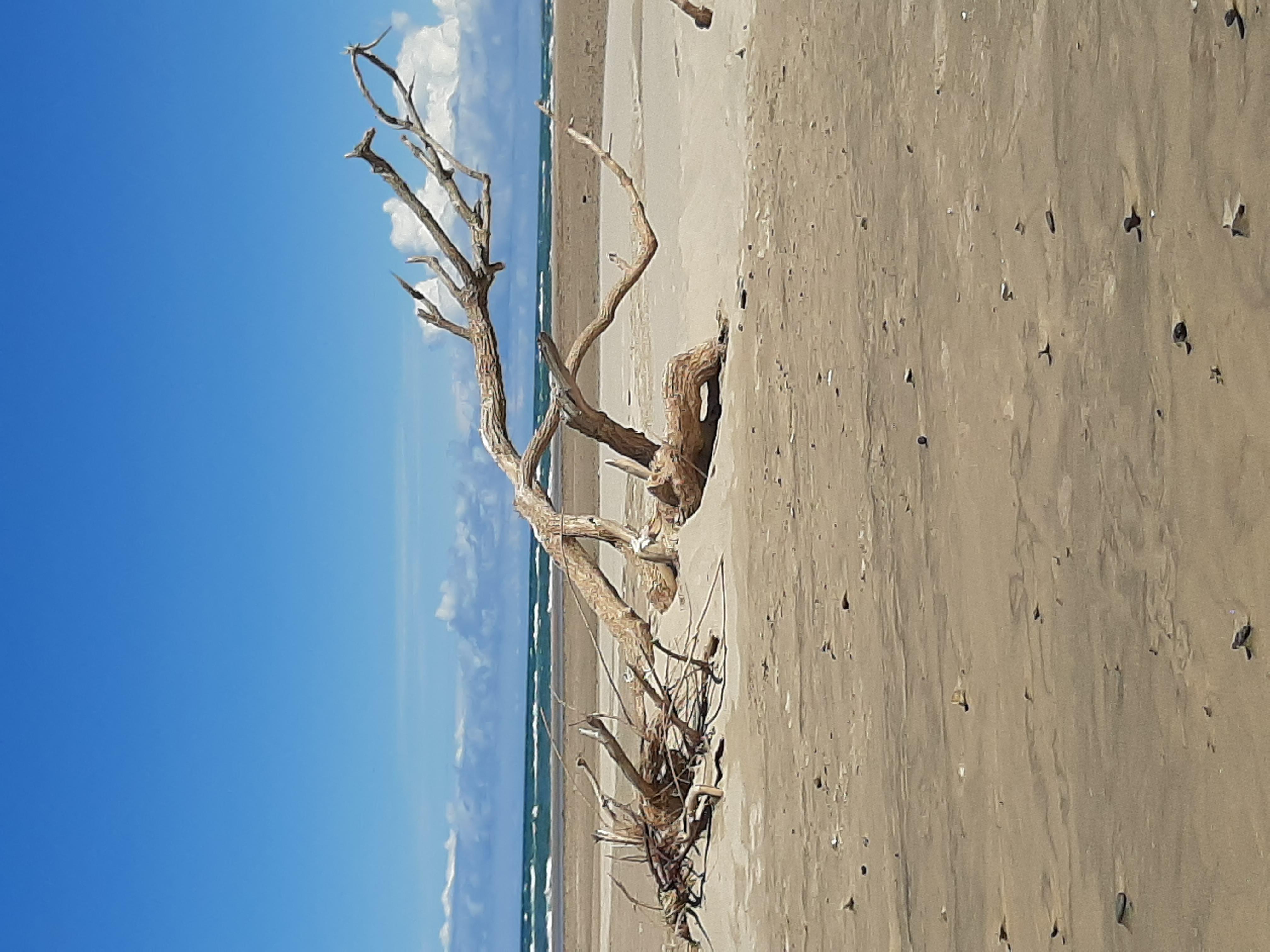 Toter Baum Am Strand